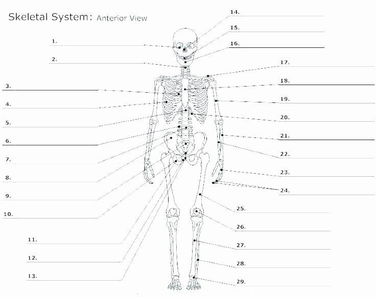 Heart Diagram Worksheet Blank Anatomy Worksheets Human ...