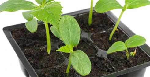 Λαχανικά που θα αγοράσετε μόνο μια φορά και θα τα καλλιεργείτε για πάντα