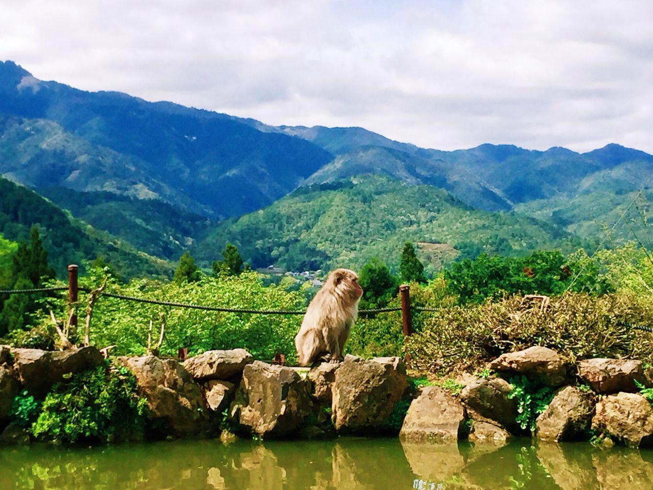 Arashiyama Monkey Park Kyoto Japan