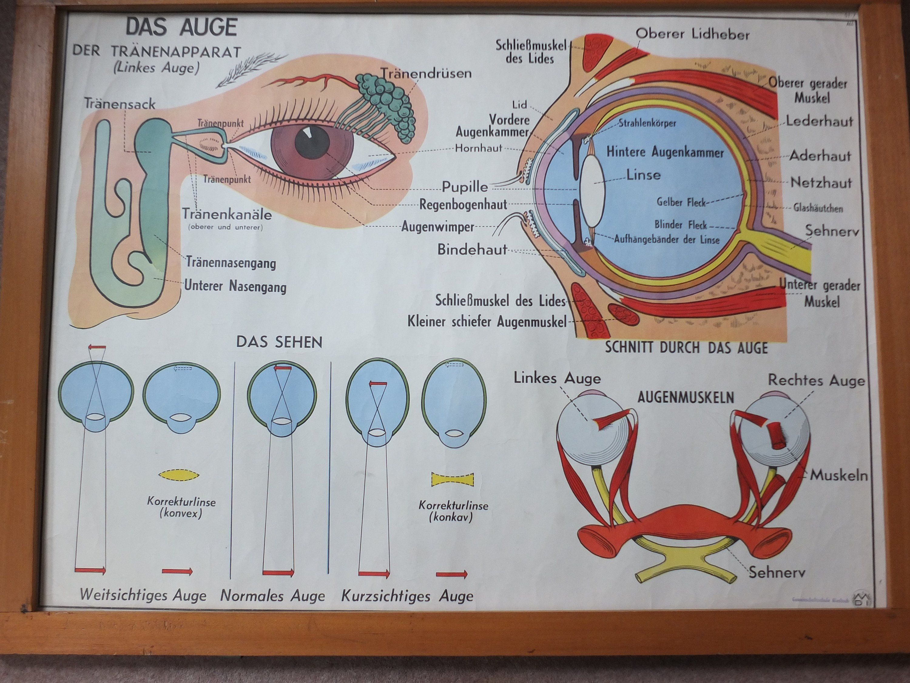 hight resolution of vintage german school poster eye vision ears nose anatomy organs medical mdi double sided wall art retro wall chart before tablets projectors and even