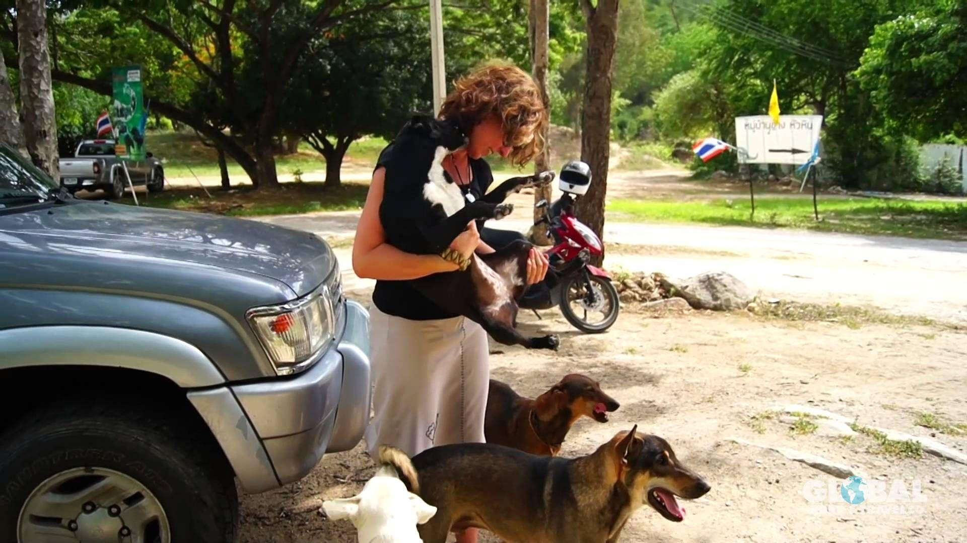 Professional veterinarian Terri from Australia volunteered
