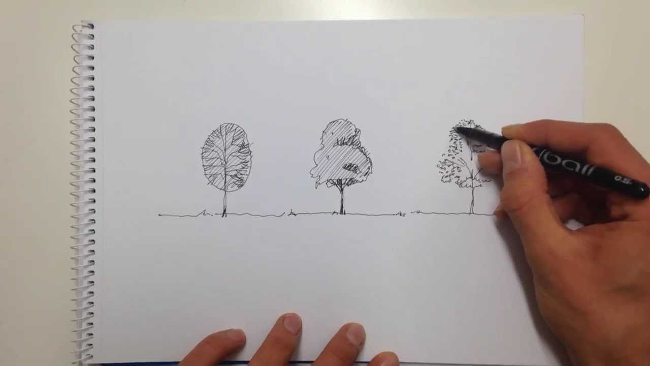 Linescapes How To Draw A Tree That S Sketchy Pinterest
