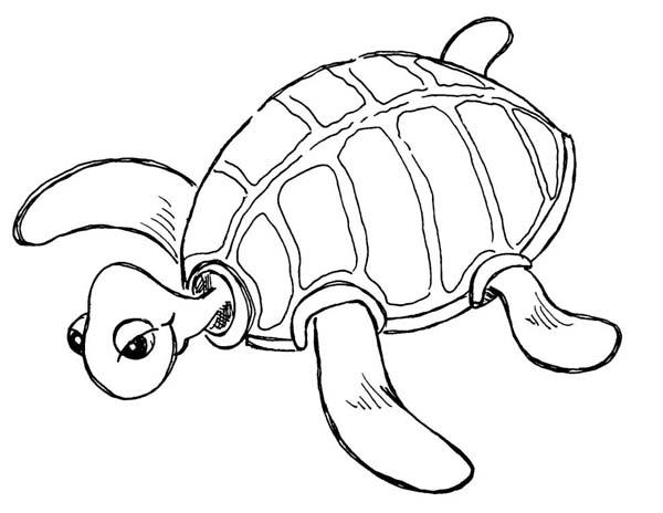 Free Sea Turtle Species Coloring Page - Download & Print ...