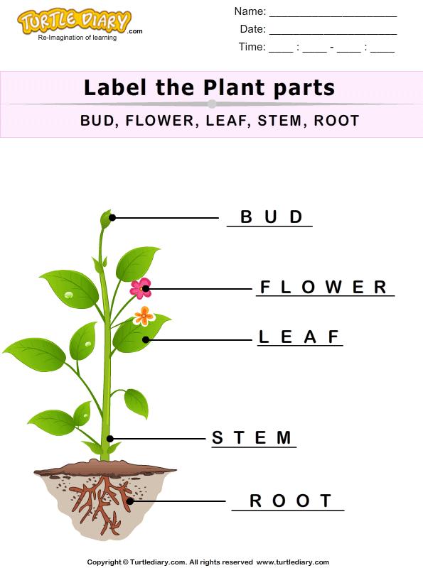 Label The Plant Parts Answer Parts Of A Plant Plants Plant Bud