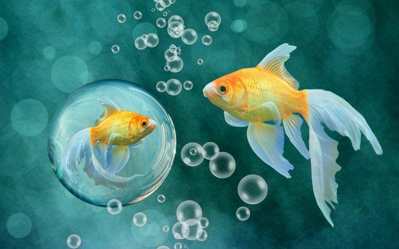 صور اجمل الاسماك البحرية في العالم خلفيات Hd ميكساتك Cross Paintings Fish Wallpaper Goldfish