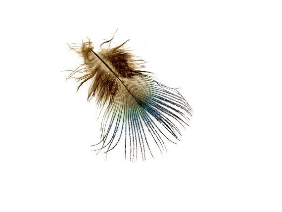 Feather Photograph Teal Brown Minimalist Fine Art by galleryzooart, $45.00