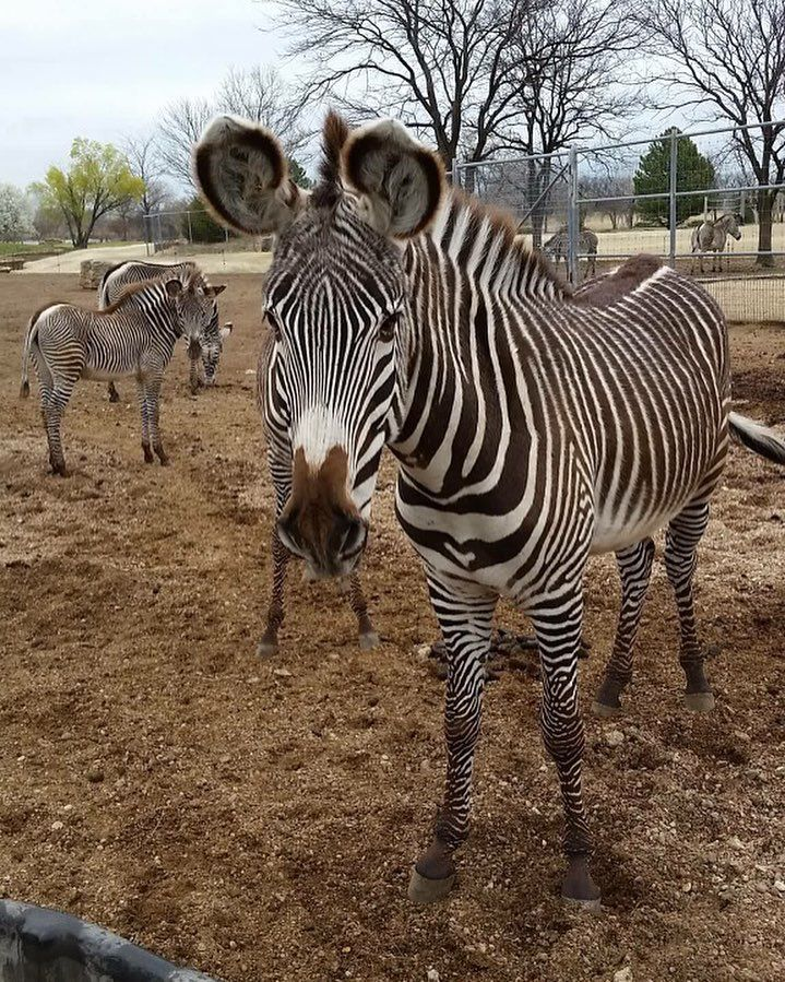 Zebras are the only animal that have their own barcode  | Our