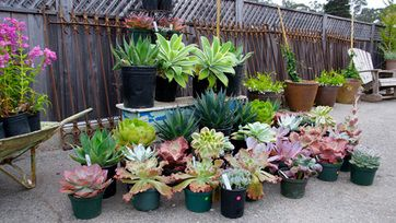 Use of cactus & succulents plants for home decoration.