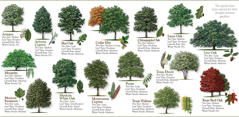 Grow Your Own Pecans