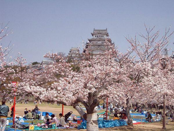 Pretty In Pink Japan S Top 10 Cherry Blossom Spots Hanami Japanese Festival Cherry Blossom