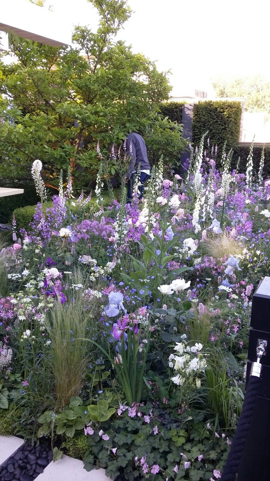 Beautiful Purples In A Cottage Garden Planting Foxgloves