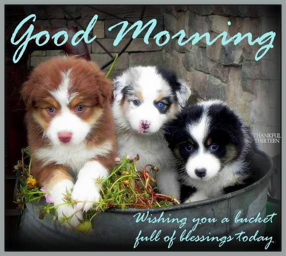 Image result for cutest animal quotes and sayings | Best Funny ...