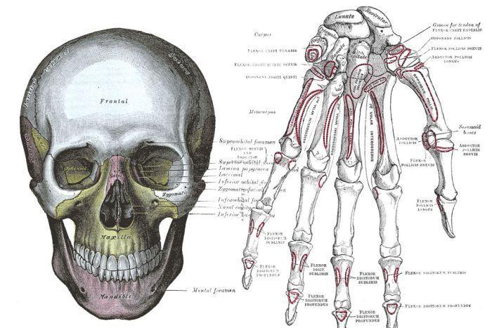 greys anatomy illustrations - Google Search | The underground man ...