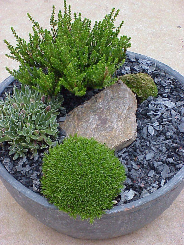 Tabletop garden bowl Mini garden, Fairy garden