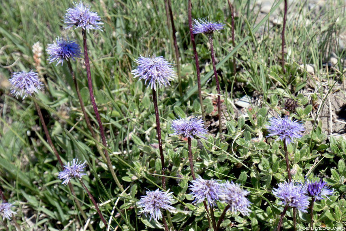 Guide Noms De Fleurs De Montagne A Voir En Randonnee Blog Outdoor Trace Les Cimes Fleurs De Montagne Noms De Fleurs Fleurs