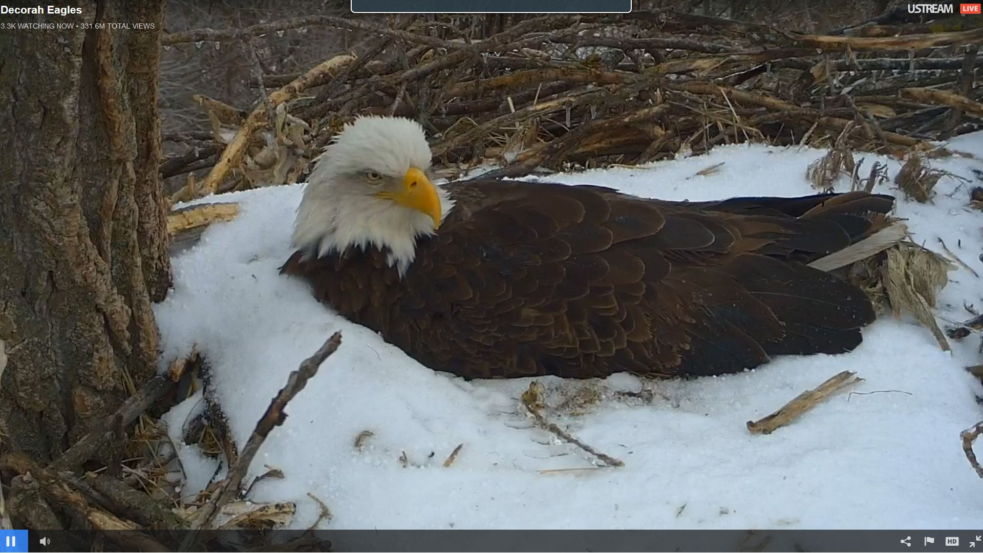 Check out the decorah bald eagles live by the raptor