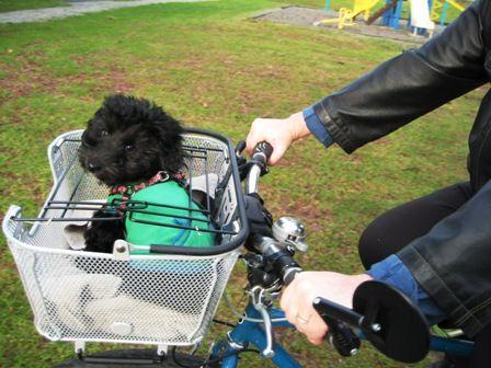 Best Bike Pet Bike Basket Under 80 Axiom Dual Function Premium