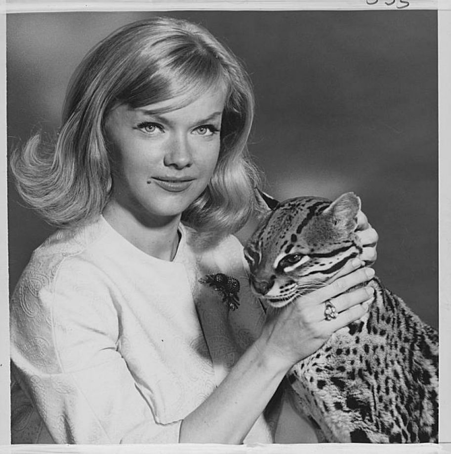 0 anne francis with ocelot