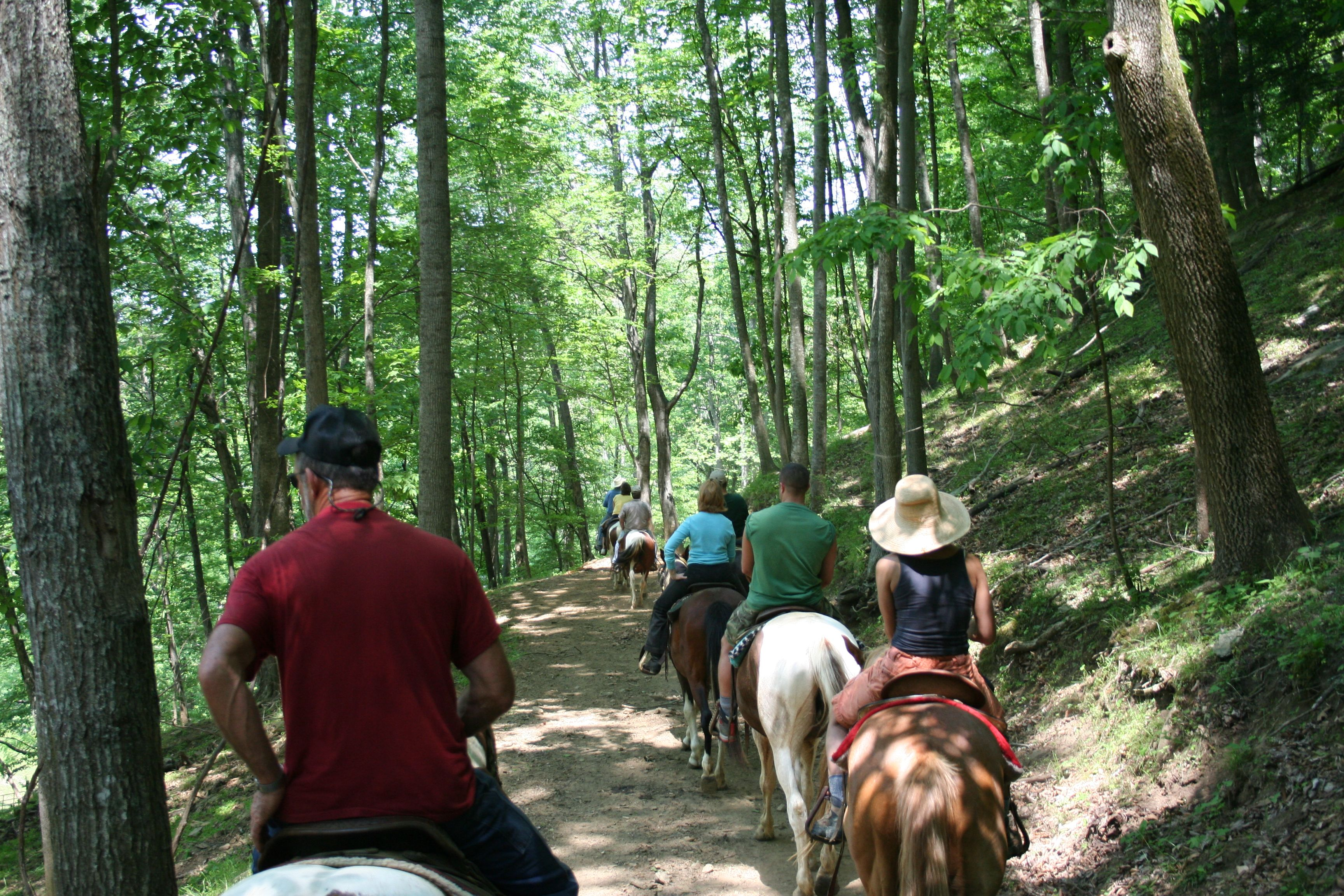 Sandy Bottom Trail Rides, Asheville | Places to go