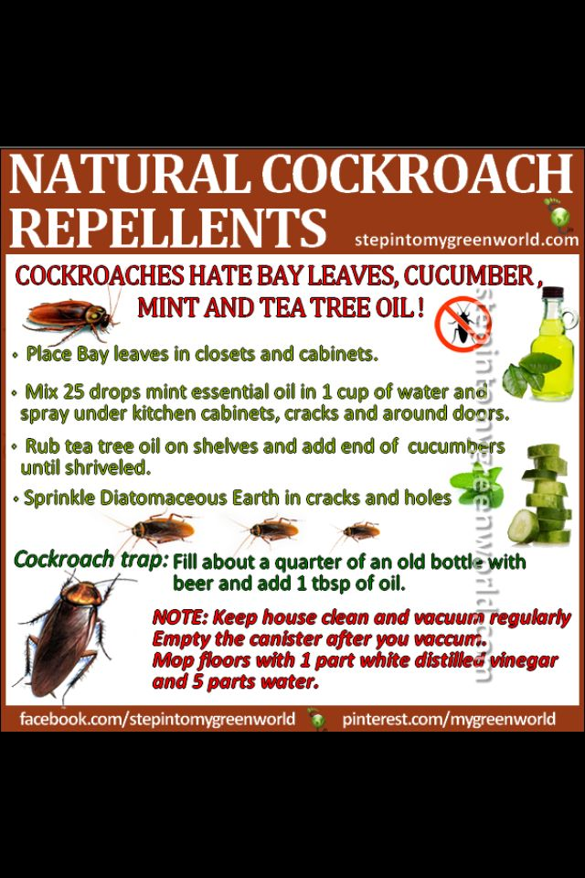 Tea Tree Oil Natural Cockroach Repellent Also Bay Leaves