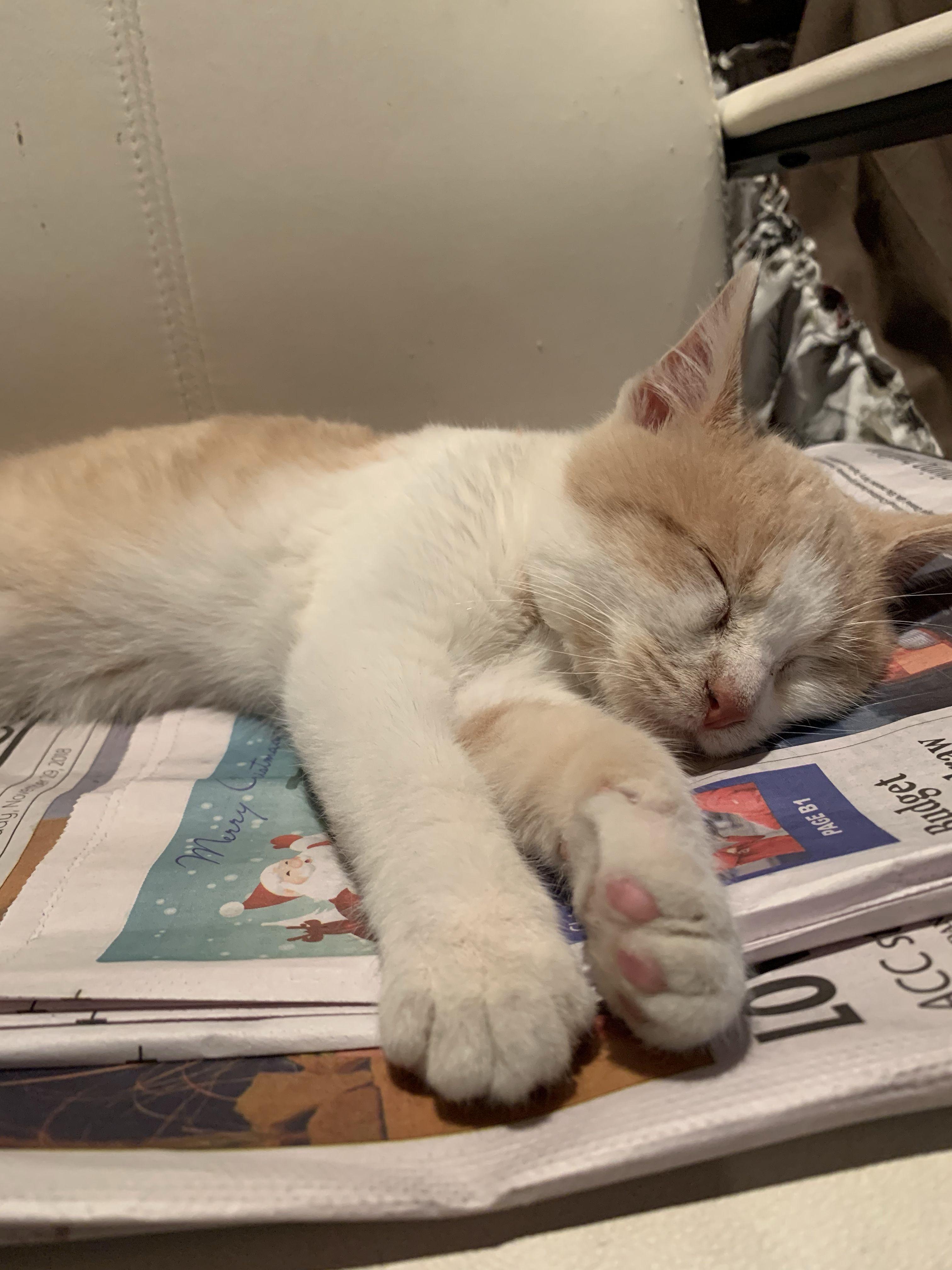 Kitten Sleeping On Newspaper Sleeping Kitten Sleepy Kitten Kitten