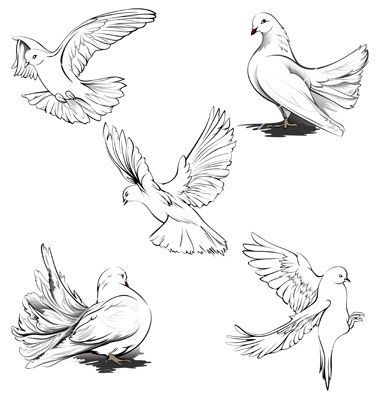 Billedresultat for how to draw a realistic dove | Dessin ...