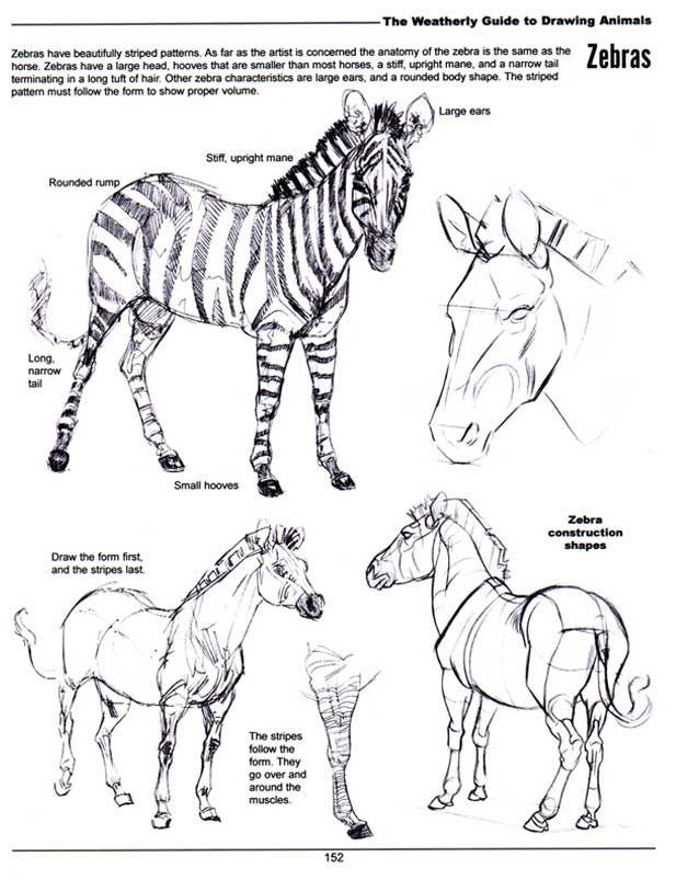 Joe Weatherly Fine Art | animal anatomy | Pinterest | Animal anatomy ...