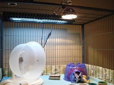 Ceramic Heat Emitter lamp for keeping the hedgie's cage warm ...