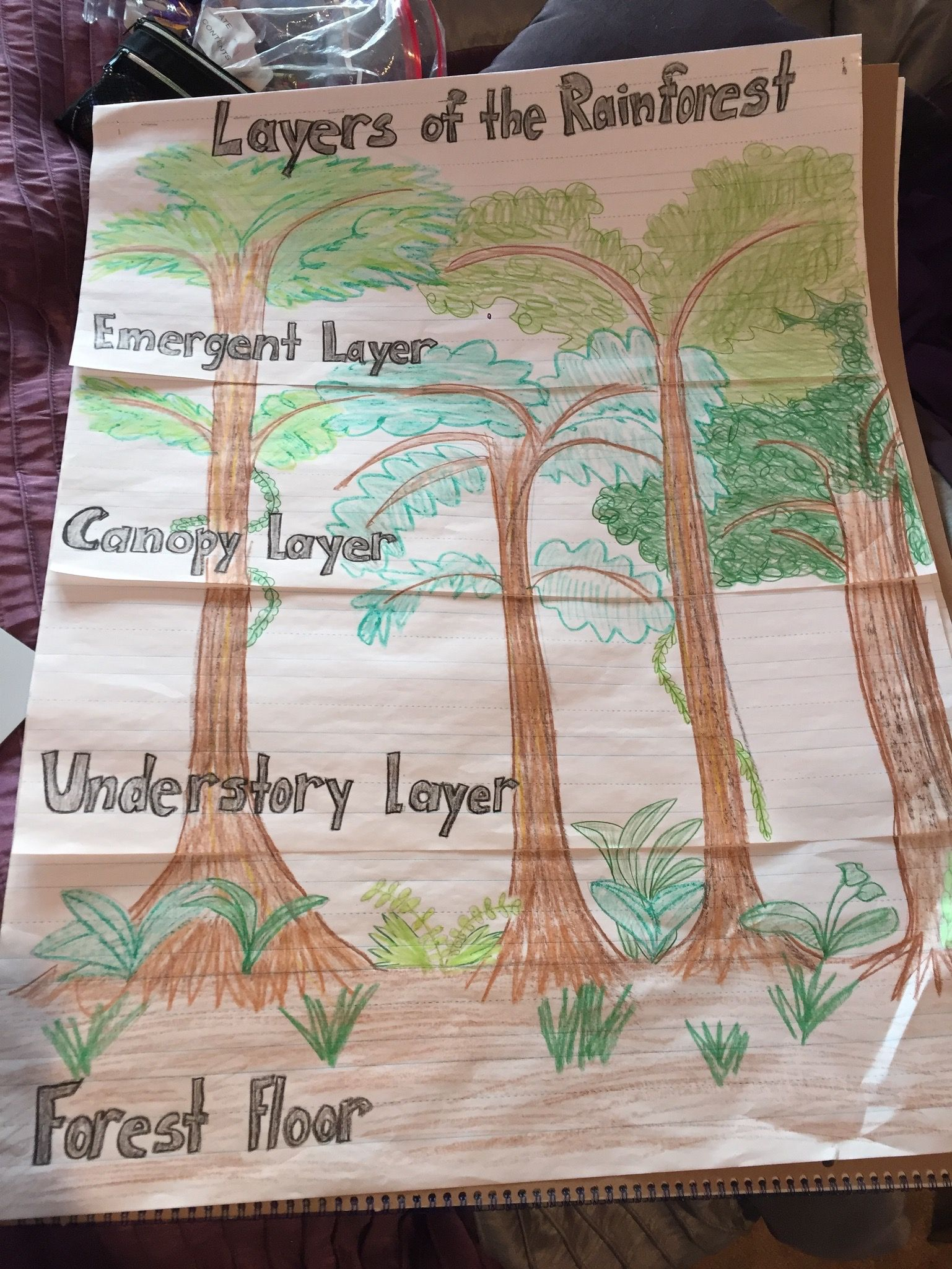 Layers Of The Rainforest Project For 2nd Grade