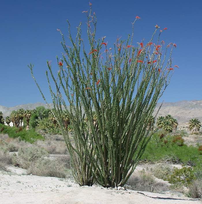 Coachella Valley Preserve California