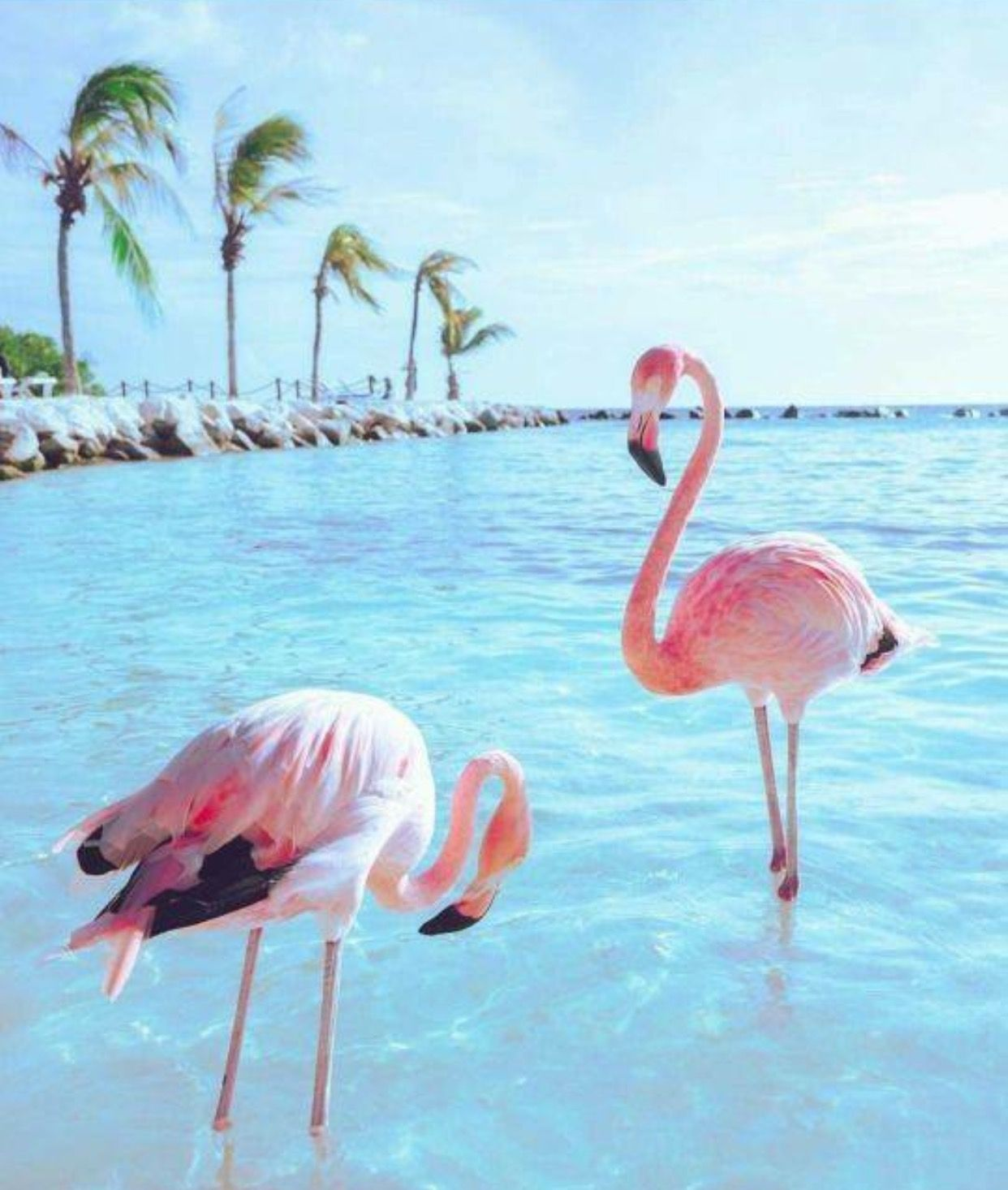 Pink Flamingos Flamingo pictures, Bird wallpaper