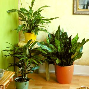 Information And Resources On Successfully Growing Indoor Plants San Joaquin Uc Master Gardeners