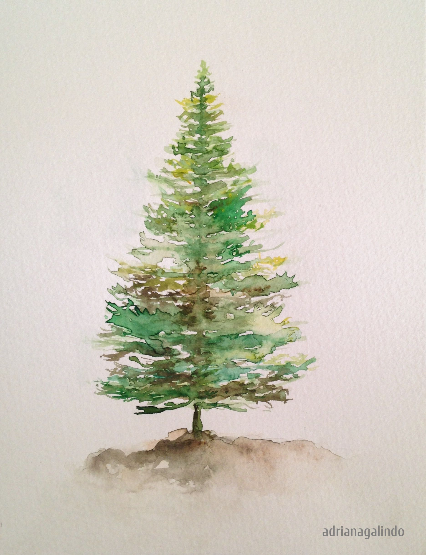40 trees project #5 Pinheiro / Pine tree 5, aquarela / watercolor 21 ...