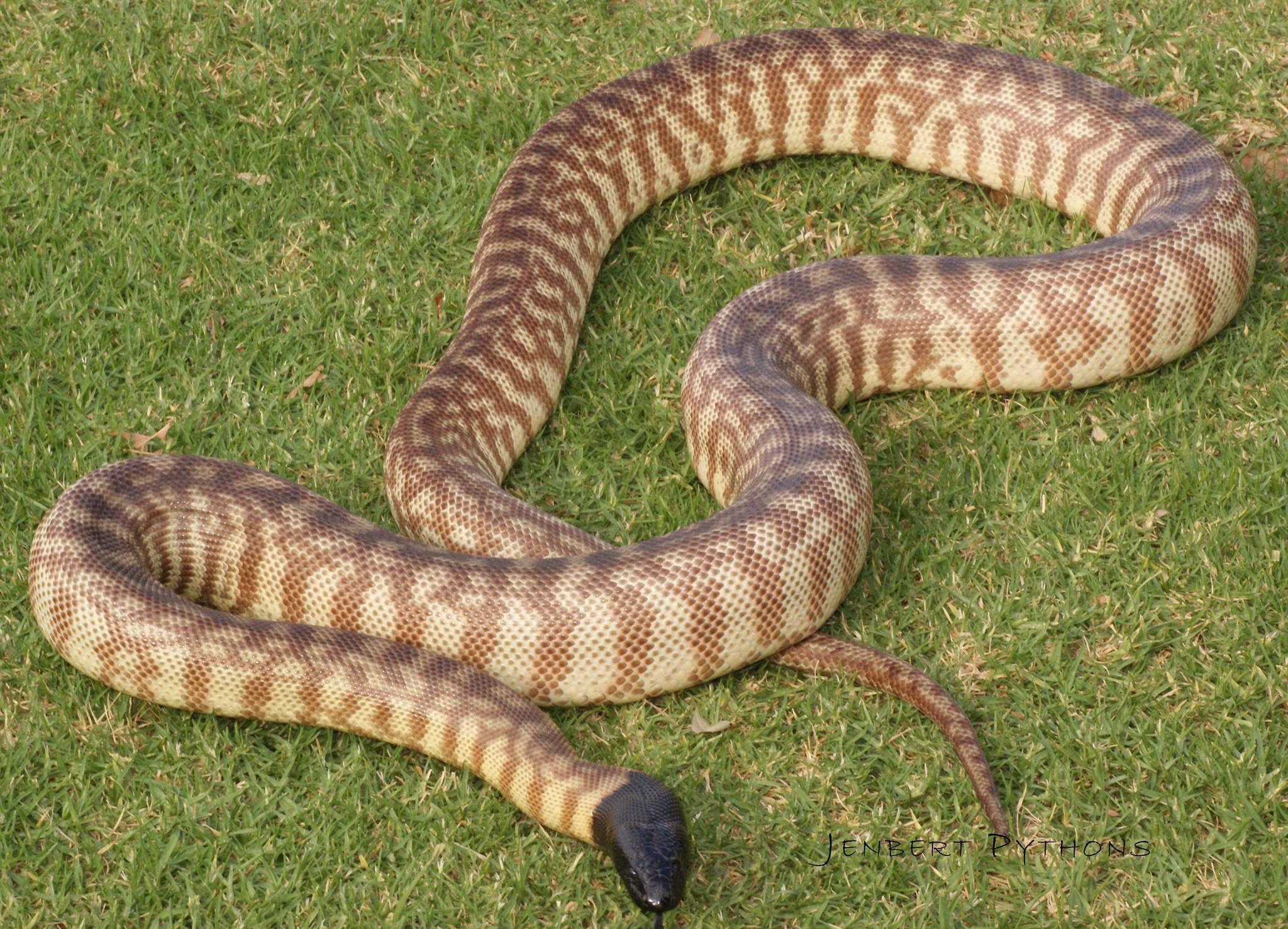 King Snake Pet Names