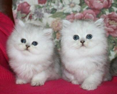 Found on Bing from in 2020 Cute cats