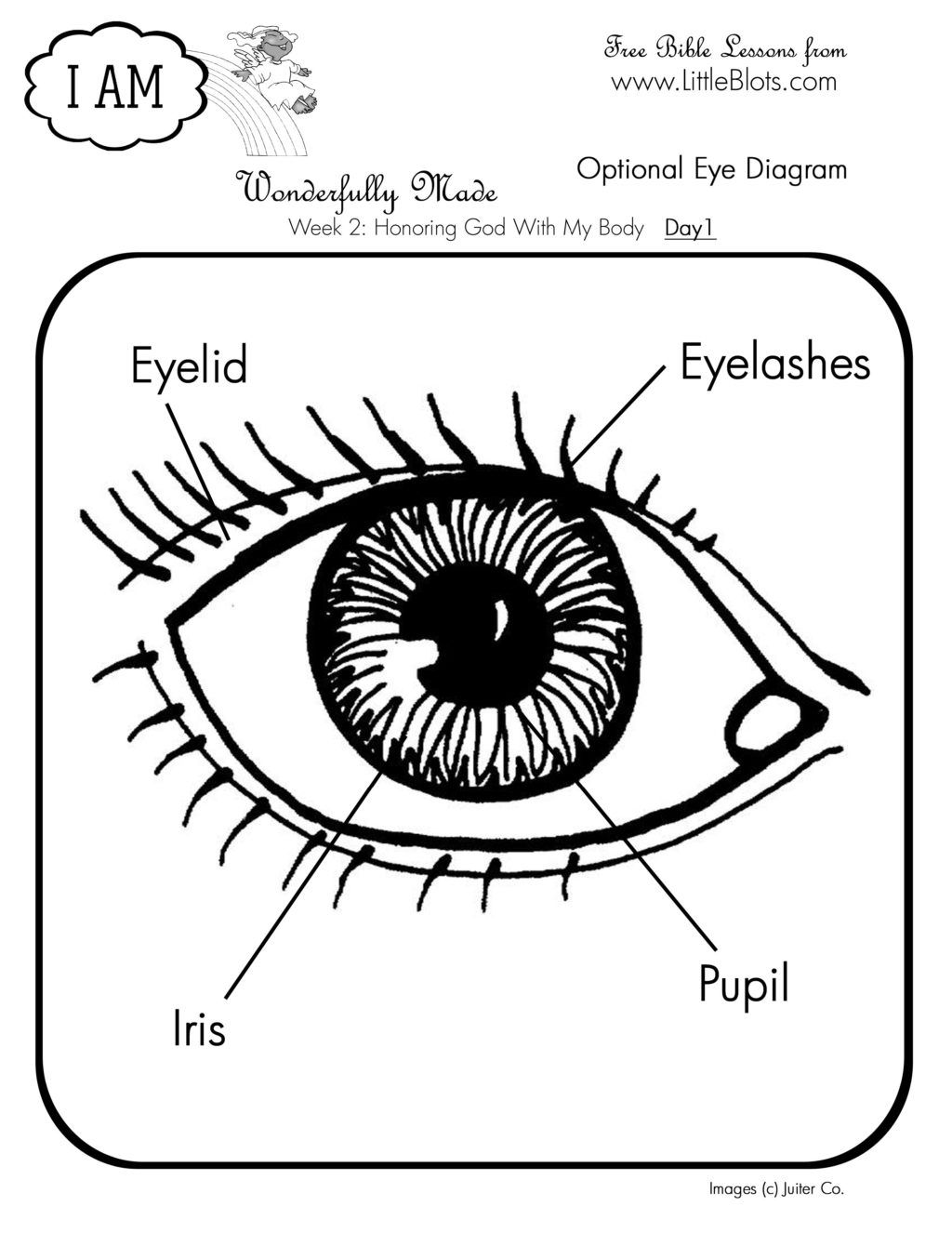 Image result for eye anatomy coloring page | Pint-Sized Pupils-For ...