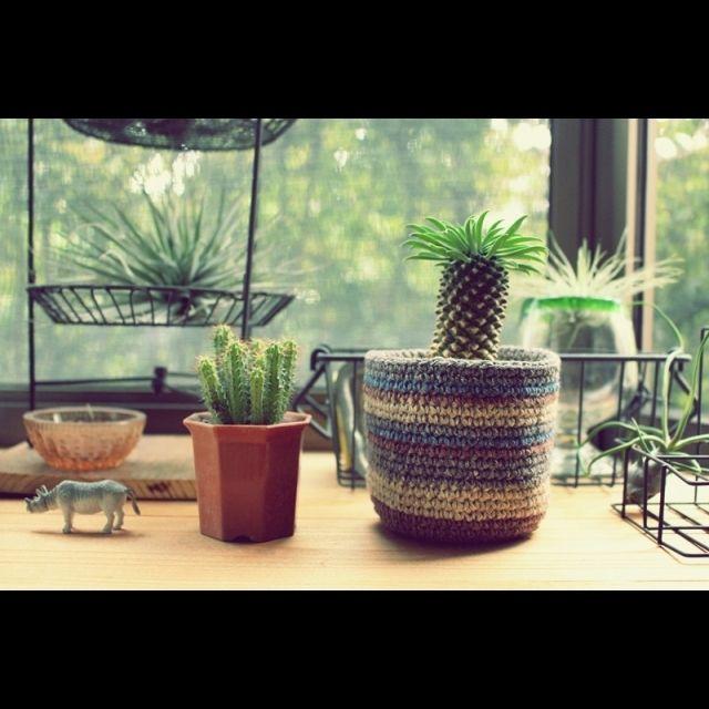 ebimusumeさんの、棚,グリーン,出窓,鉢カバー,編み物部,蘇鉄麒麟,のお部屋写真