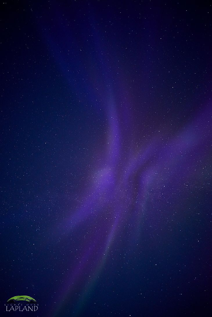 Aurora, Sweden, great purple butterfly!