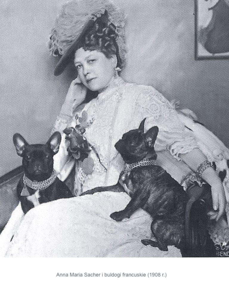 Vintage French Bulldogs 1908 Russia Franzosische Bulldoggen Kunst Vintage Hund Hundefotos