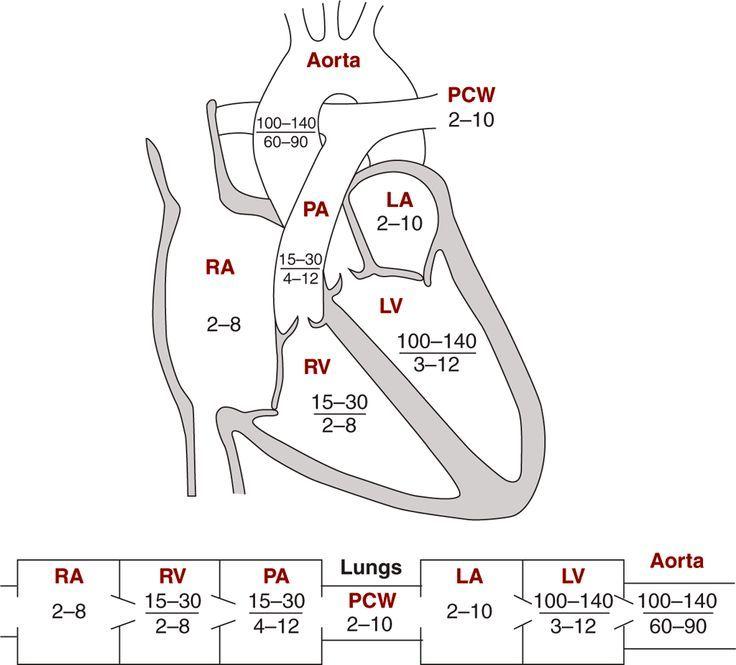 normal cardiac pressures - Google Search USMLE/COMLEX Cardiac