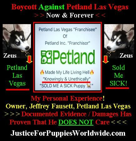Pin by Justice For Puppies Worldwide on Home Page For