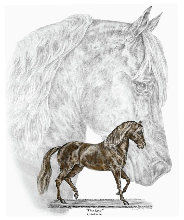 Fine Steps - Paso Fino Horse Print Color Tinted Drawing - Fine Steps ...