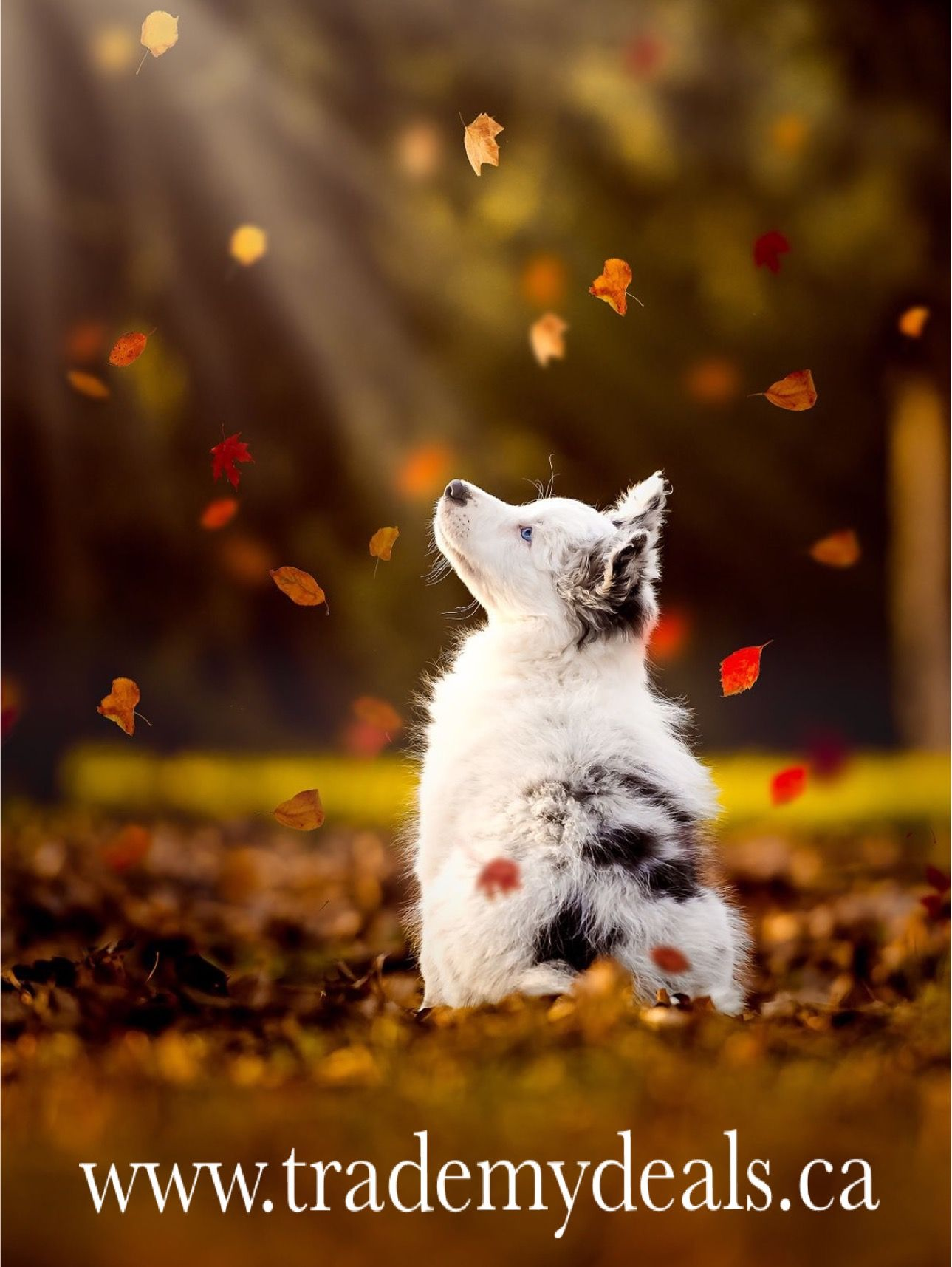 Holiday lane is open on trademydeals.ca Cute animals