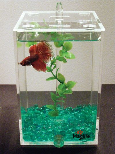 The maglife usa clean sweep betta tank is an aquarium for for Betta fish tank size