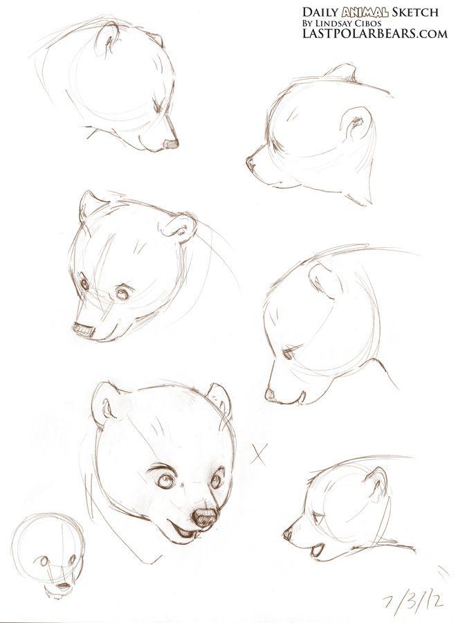 sketching bear cubs | Daily Animal Sketch – Arctic Fox and Polar ...
