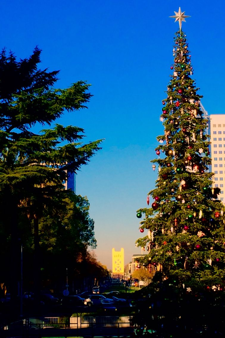 California State Christmas tree with the Tower Bridge