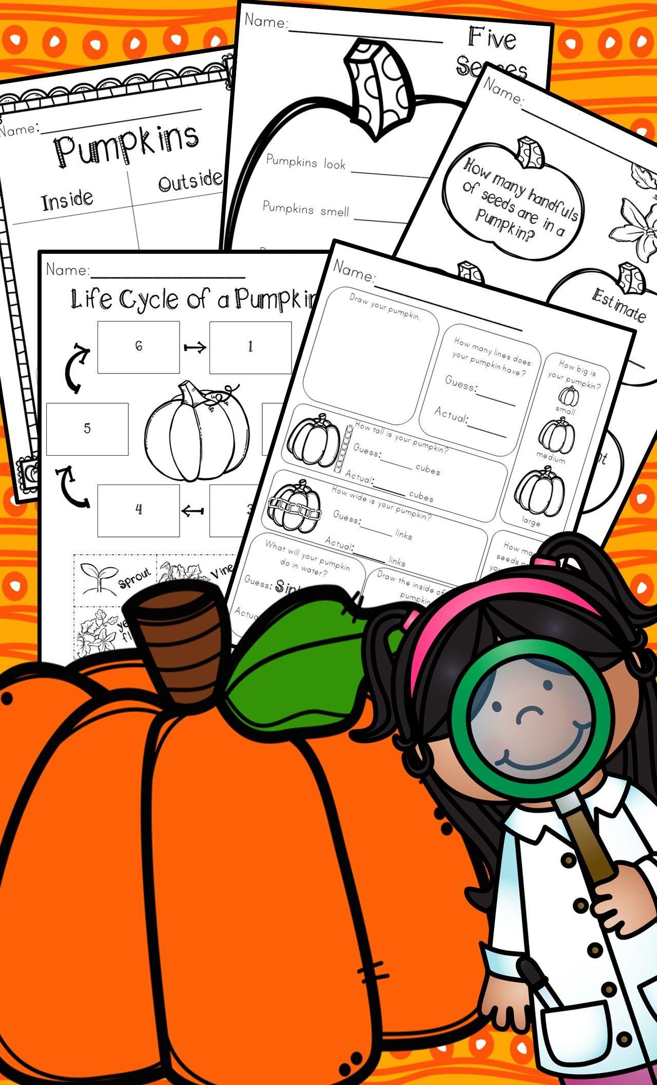 Kindergarten Pumpkin Science Pumpkin Exploration Pumpkin