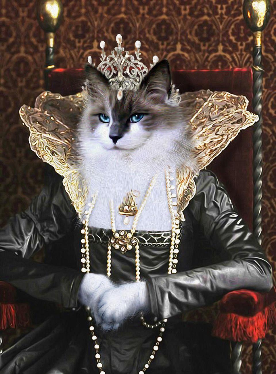 """Skyler"" by Pompous Pets from Sydney, Australia Cats"