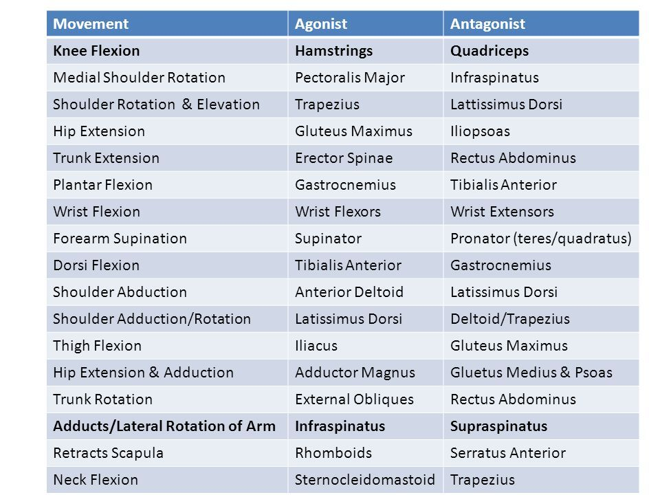 Agoist Antagonist Muscle Pairs Physical Therapy Student
