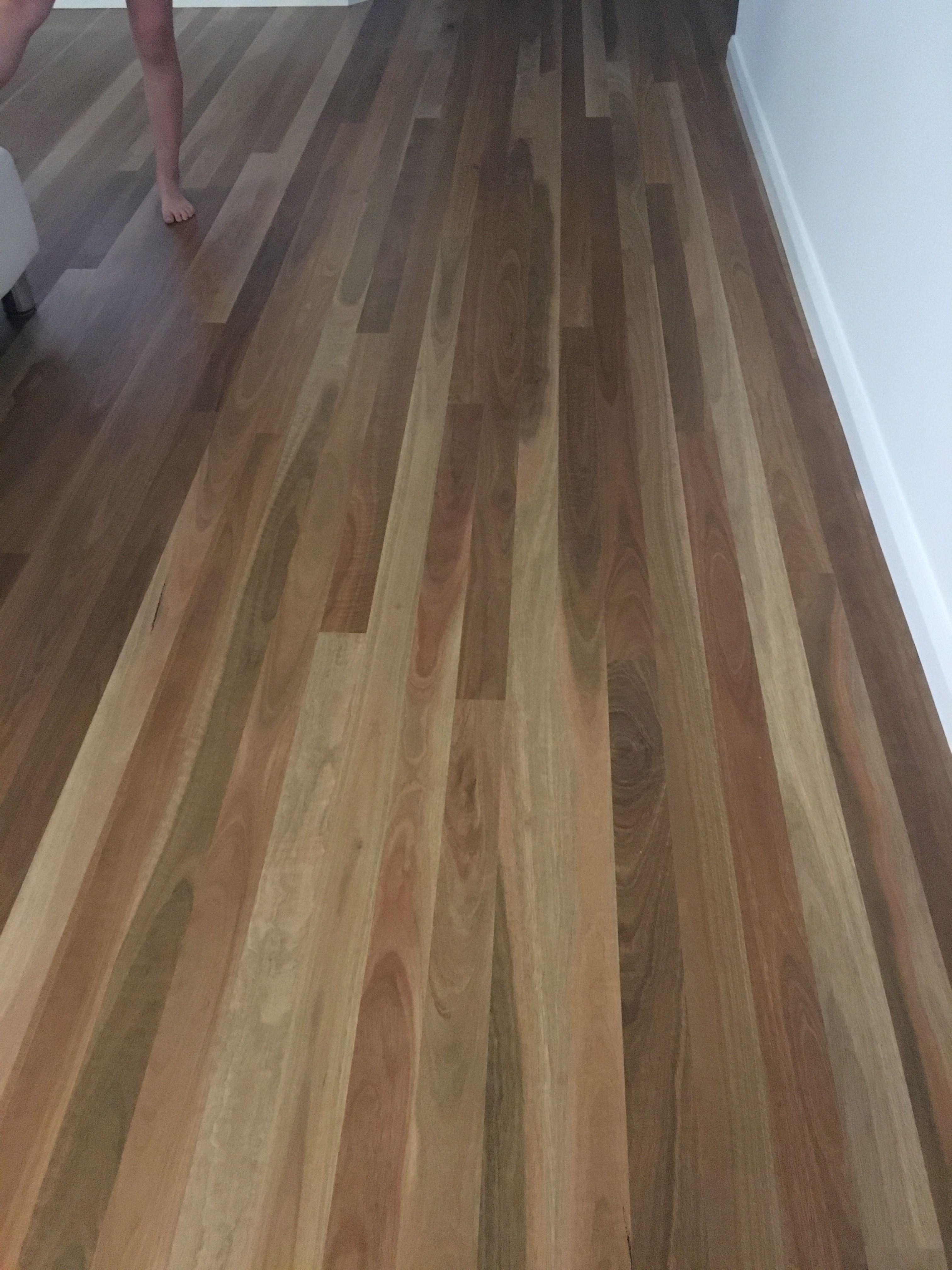 Spotted gum timber floors matt finish | Merewether ...